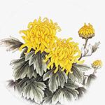 中国风水墨菊花
