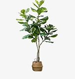 现代简约绿植盆栽
