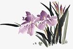 古典中国画兰花