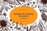 农作物插画