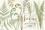 蕨类植物水彩画