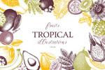 热带水果矢量