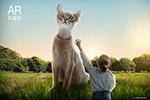 女孩与猫AR海报