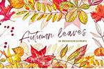 水彩秋季叶子插画
