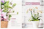 家居植物杂志模板