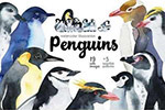 手绘水彩企鹅插画