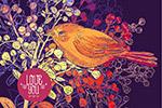 多彩花鸟线描插画