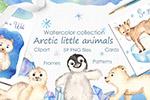 水彩北极小动物