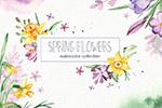 春季花卉水彩花卉