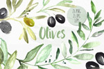 橄榄植物水彩插画