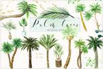 水彩椰子树