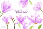 水彩紫玉兰花