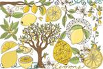 夏季柠檬插图