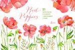 水彩罂粟花卉