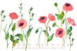 水彩手绘罂粟花