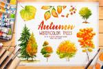 手绘水彩秋天植物