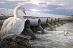 动物栖息环境保护