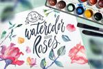 水彩玫瑰插画