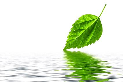 实用图片,精美图片,印刷适用,高清图片,创意图片,风景,风光,树叶,水