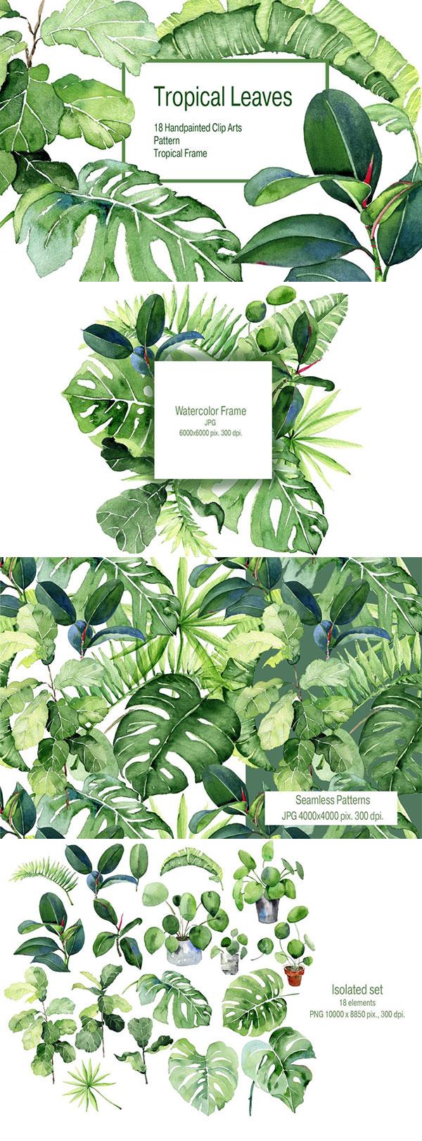 水彩热带手绘植物