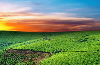 精美图片,印刷适用,高清图片,创意图片,风景,自然风光,天空,田野,农田