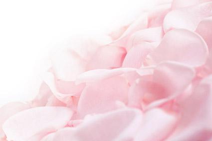 粉红玫瑰花花瓣