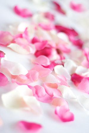玫瑰花花瓣