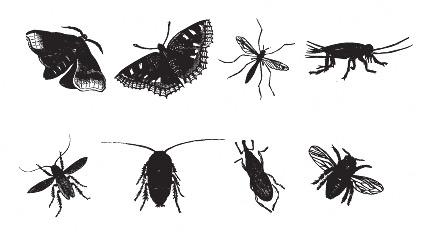 蚊子黑白简笔画