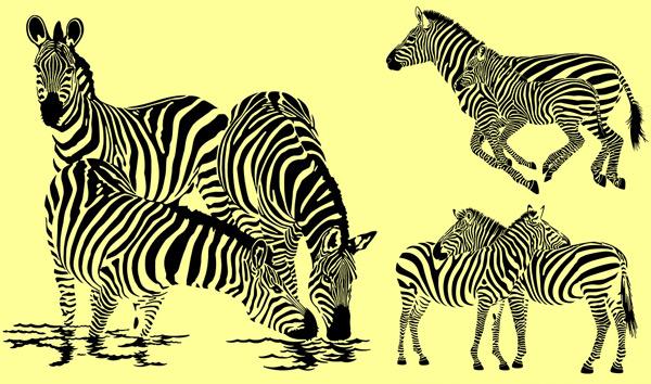 斑马怎么画步骤图
