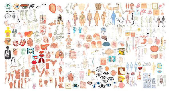 骨头,人体结构图