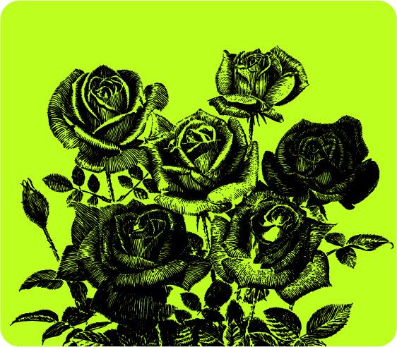 钢笔画玫瑰花