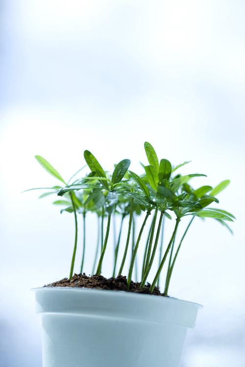 素材分类: 花草树木所需点数: 0 点 关键词: 绿叶幼苗,树叶,叶子