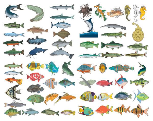 各种鱼类矢量