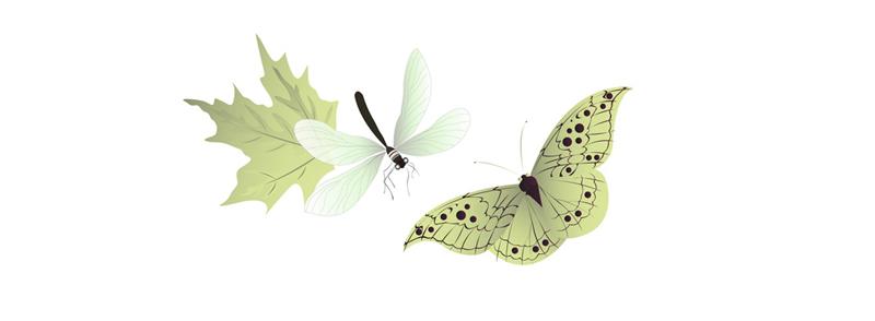 关键词: 矢量蝴蝶蜻蜓,矢量昆虫,叶子,生物,翅膀,ai格式 下载文件