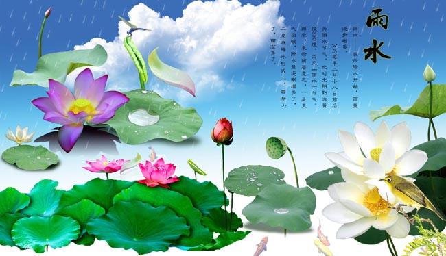 莲花的图片画图