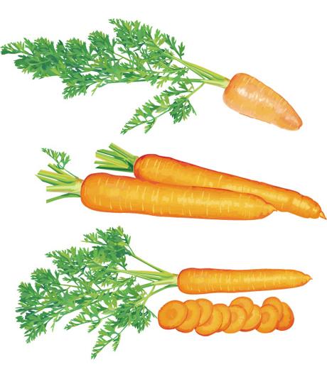 超写实胡萝卜矢量,胡萝卜,萝卜,胡萝卜片,矢量蔬菜,新鲜蔬菜,绿叶子