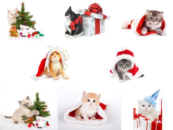 猫猫过圣诞高清图片集,可爱,小猫,猫咪,圣诞节,礼物,动物,宠物,圣诞帽
