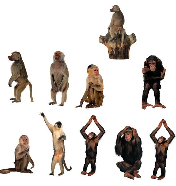 猴子高清图片