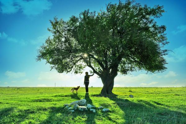 0 点 关键词: 一颗大树风景风光高清图片,大树,风景,风光,美景,茂盛