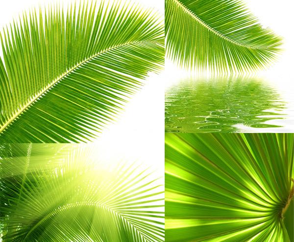 棕榈树叶简笔画