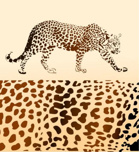 豹纹的画法步骤