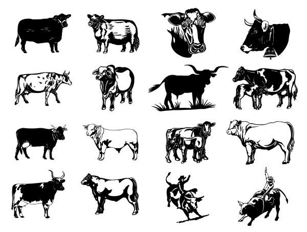 黑白画,简笔画,牛,牛气冲天,奶牛,肉牛,牛肉,牦牛,牛头,水牛,牛角