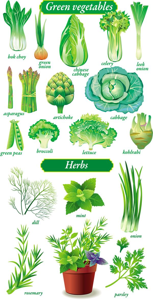 关键词: 精致绿色蔬菜矢量素材,白菜,矢量素材,油菜,小白菜,葱,蒜