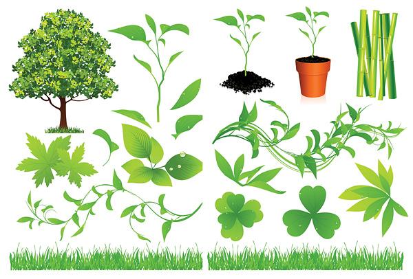 0 点 关键词: 绿色植物系列矢量素材,绿色植物,叶子,树叶,树木,大树