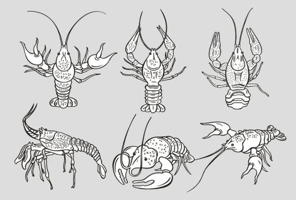 单色龙虾矢量