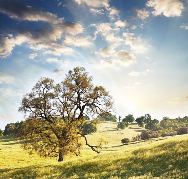 自然坡地景观