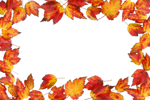 Leaves material border 04