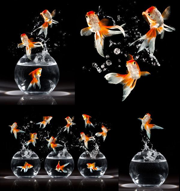 跳跃的金鱼
