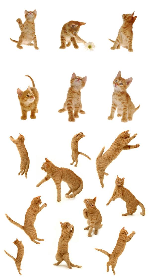 可爱的小猫高清图片,家猫,宠物,猫咪,花,扑,跳,姿势,尾巴,爪子,可爱
