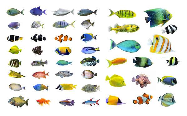 各种鱼类-2
